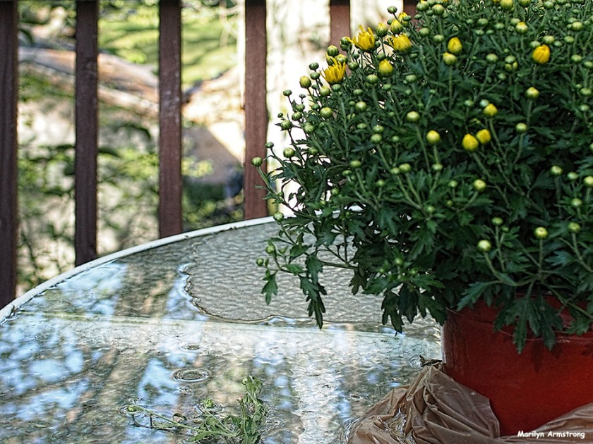 72-water-reflection-mid-september-mums-09132016_015