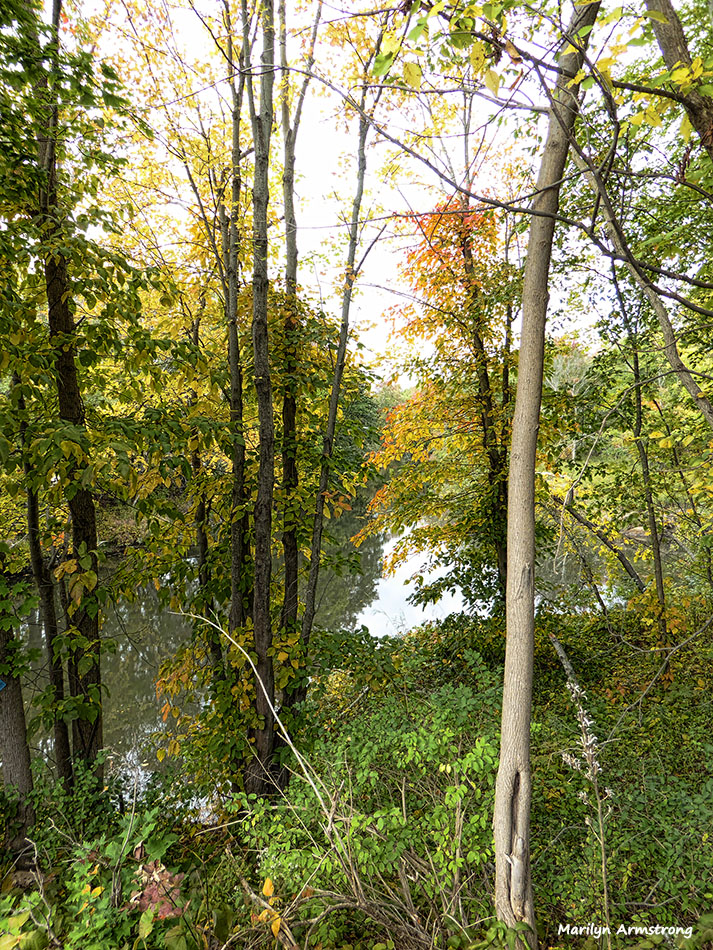 72-autumn-river-10042016_003