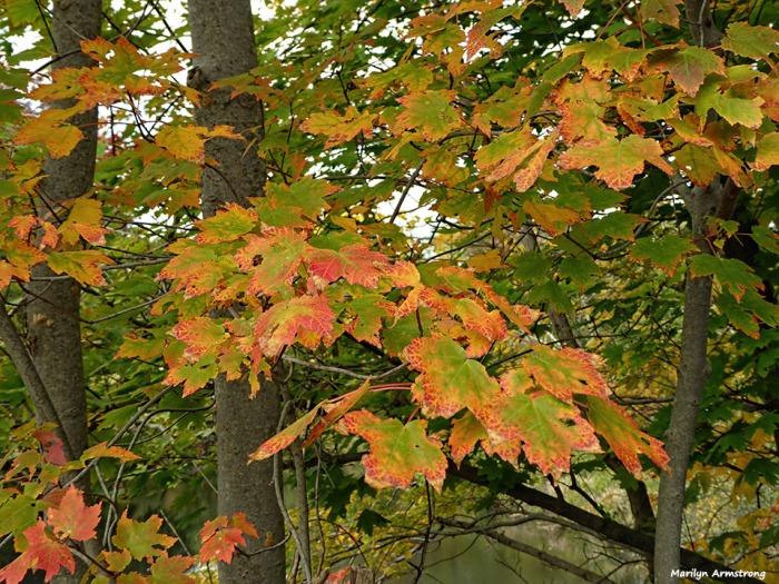 72-autumn-river-10042016_035