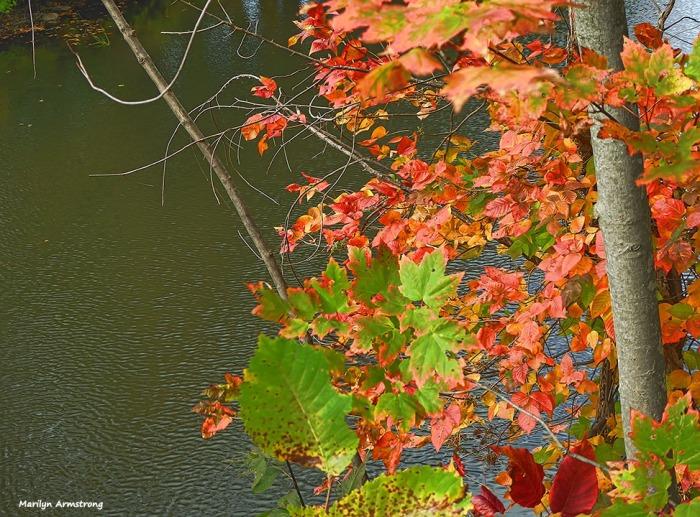 72-autumn-river-10042016_037