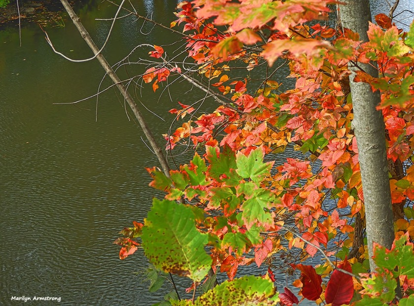 72-autumn-river-10042016_037