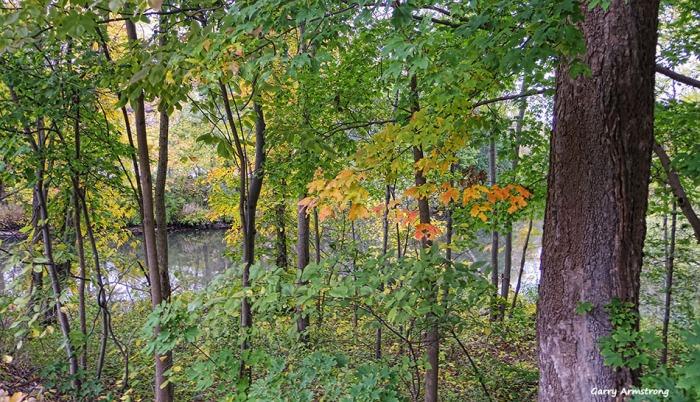 72-autumn-river-ga-10042016_005