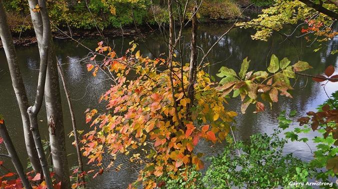 72-autumn-river-ga-10042016_025