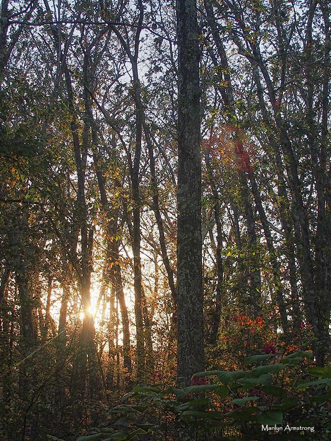 72-autumn-twilight-23102016_18