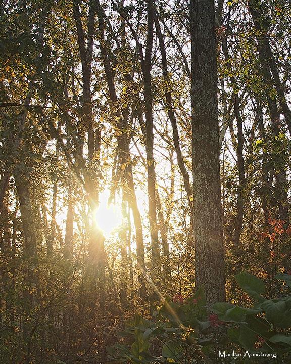 72-autumn-twilight-23102016_20