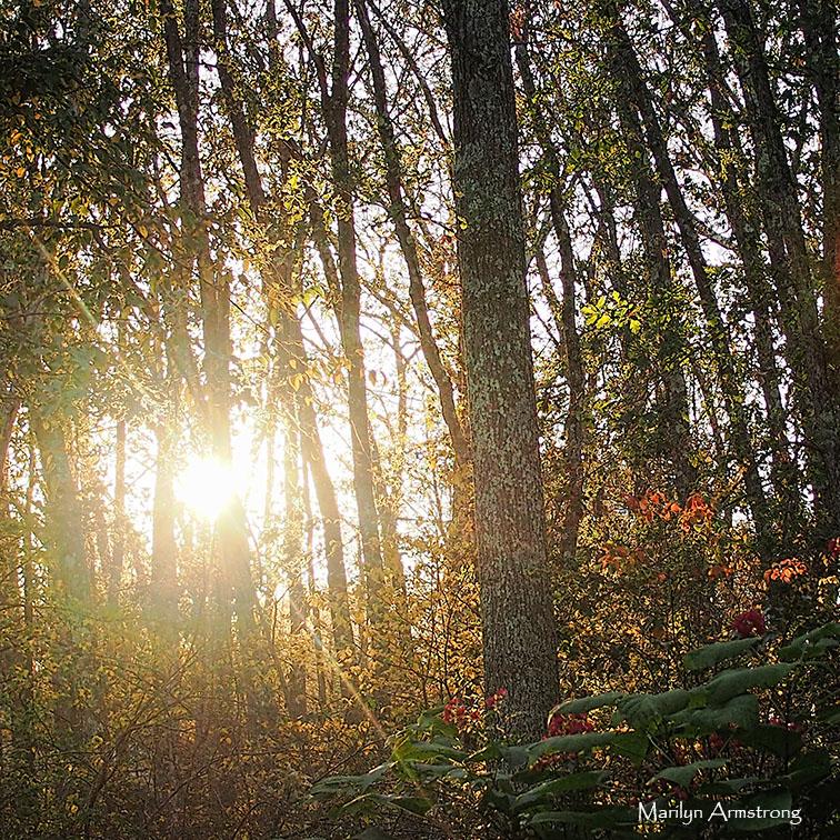 72-autumn-twilight-square-23102016_14