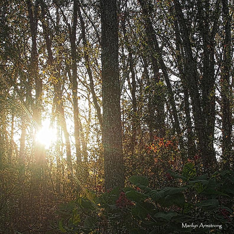 72-autumn-twilight-square-23102016_21