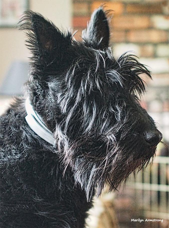 Gibbs in profile