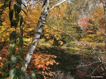 72-birch-tree-river-bend-ga-10172016_145