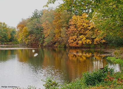 72-birds-river-bend-ma-10172016_148