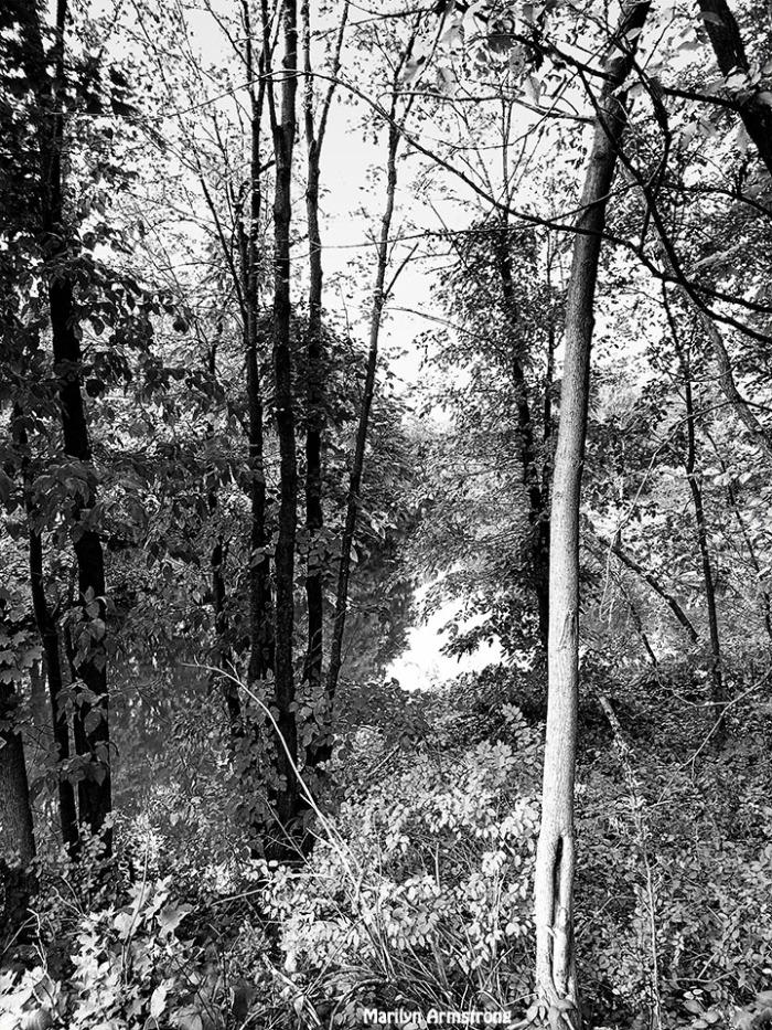 72-bw-autumn-woods-10042016_003