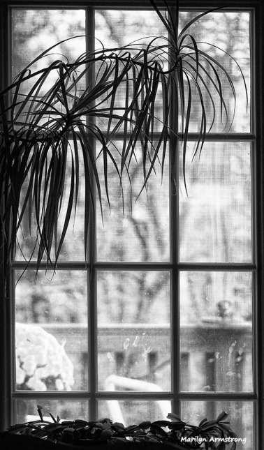 72-bw-looking-back-flowers-10162016_07