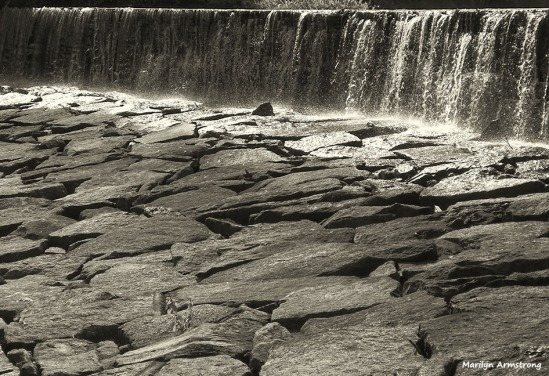 72-bw-rocks-whitins-dam_038