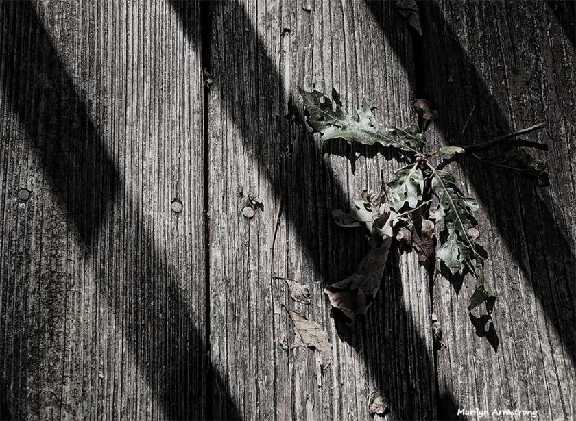 72-bw-wood-shadow-deck-10052016_013