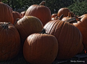 72-dark-pumpkinspm2-mar-09