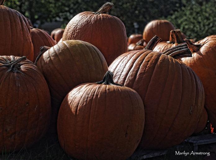 72-dark-pumpkinspm2-mar-09