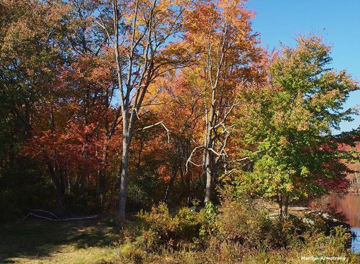 72-foliage-ri-omd-ma-10142016_010