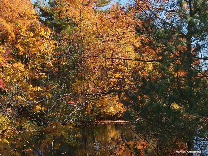 72-foliage-ri-omd-ma-10142016_013