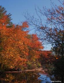 72-foliage-ri-omd-ma-10142016_028