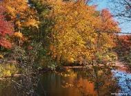 72-foliage-ri-omd-ma-10142016_044