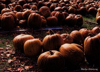 72-glowing-pumpkins-p3-mar_025