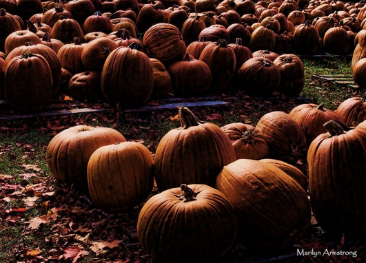 72-glowing-pumpkins-p3-mar_025