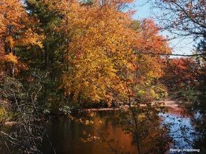 72-gold-foliage-ri-omd-ma-10142016_045