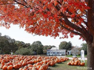 72-many-pumpkins-p3-mar_031
