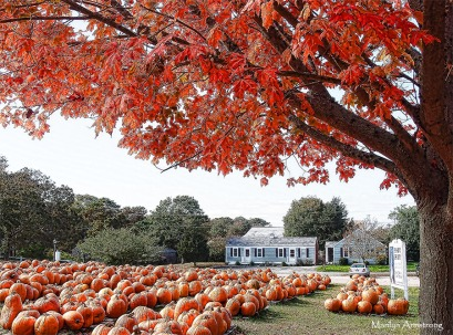 72-many-pumpkins-p3-mar_031