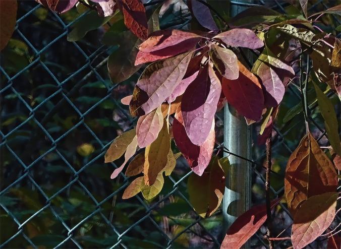 72-november-leaves-31102016_29