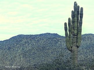 72-one-cactus-vintage-mar-sunday-011016_236