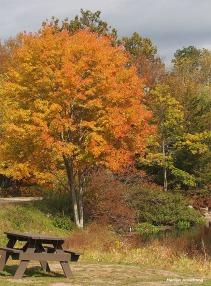 72-picnic-river-bend-ma-10172016_132