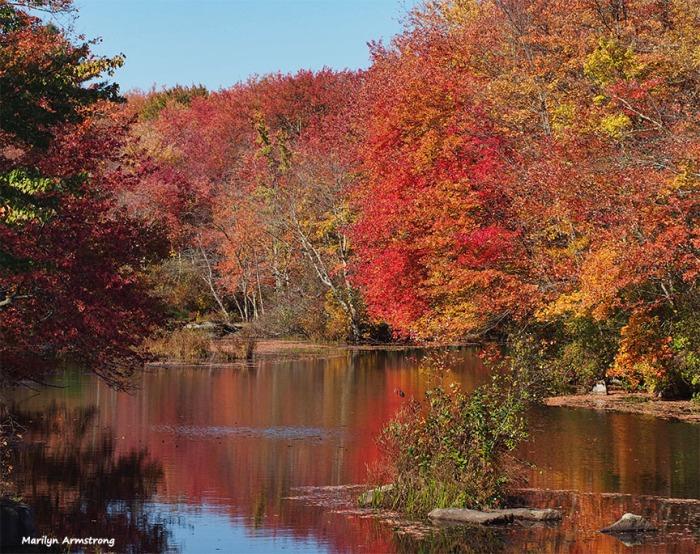 72-red-foliage-ri-pl6-ma-10142016_004