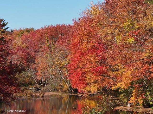 72-red-reflections-foliage-ri-omd-ma-10142016_085