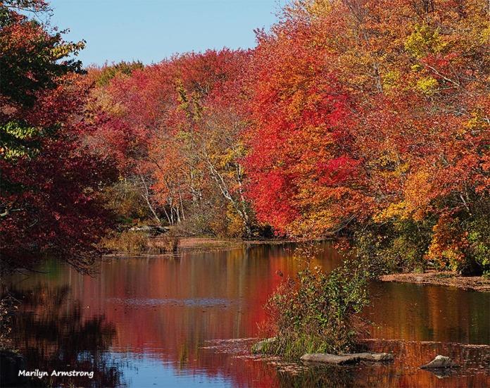 72-red-reflections-foliage-ri-pl6-ma-10142016_004