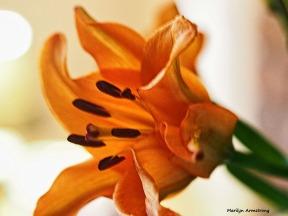 72-romantic-flowers-10162016_01