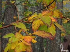 72-sassafrass-home-late-autumn-10202016_08