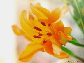 72-soft-flowers-10162016_03