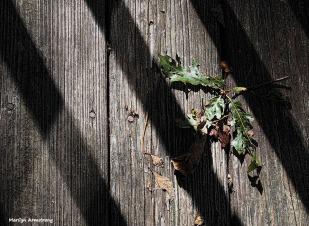 Shadow-striped deck