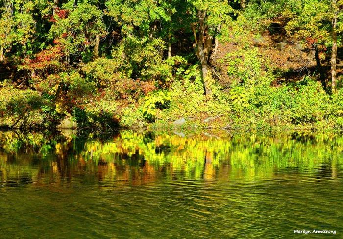 72-yellow-green-mumford-dam-autumn-10102016_048