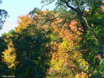 72-yellow-mumford-dam-autumn-10102016_087