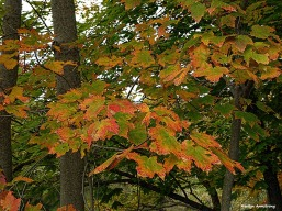 72-autumn-river-10042016_036