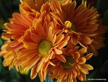 72-bouquet-22112016_003