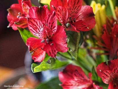 72-bouquet-22112016_009