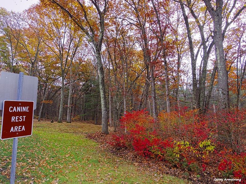 72-dog-rest-area-garry-november-ct-03112016_126