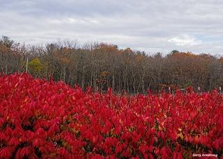 72-field-of-red-garry-november-03112016_016