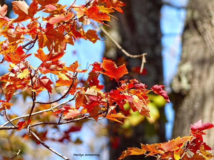 72-foliage-november-02112016_024