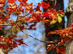 72-foliage-november-02112016_026