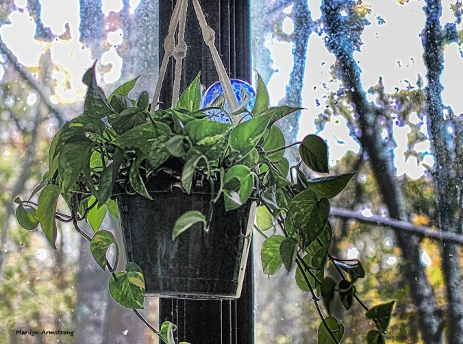 Philodendron in the kitchen window