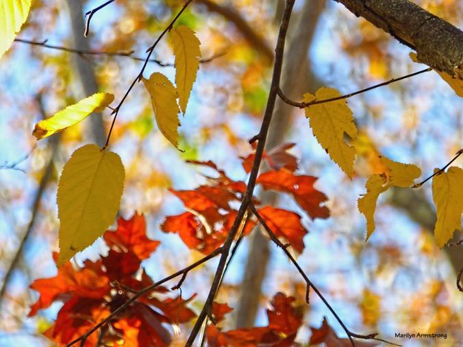 72-luminous-leaves-08112016_27